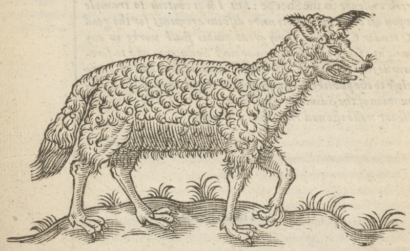 Illustration of wolf in sheep's clothing from Folger STC 6608 Copy 1.