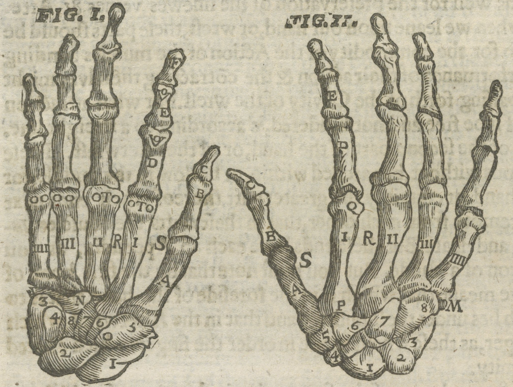 Illustration of the bones of the hand from Folger STC 19189.